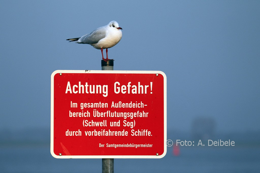 luehe-anleger_2774